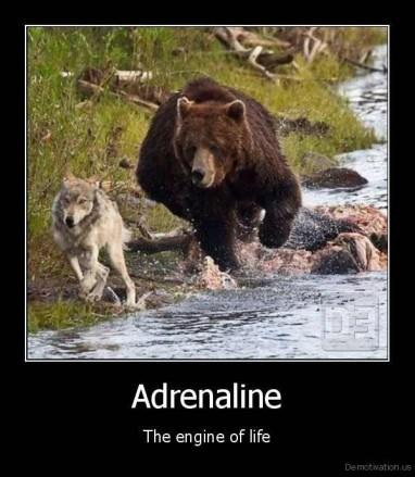 adrenalineIMG_7863